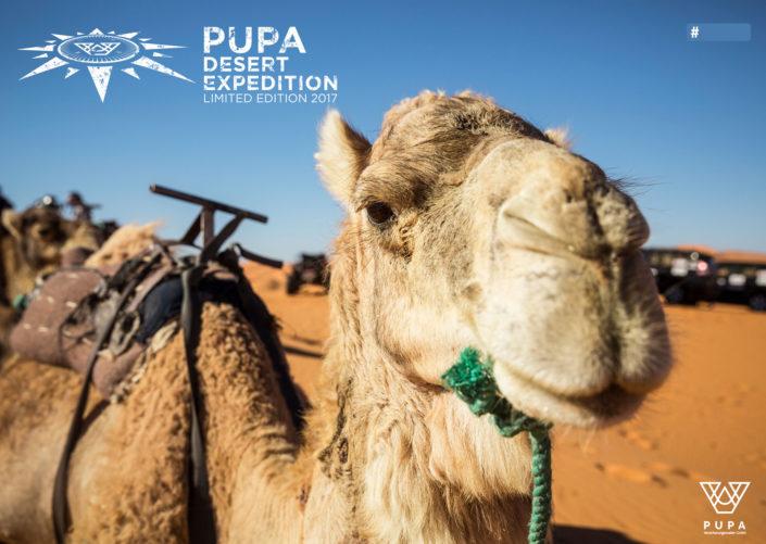 PUPA goes Desert