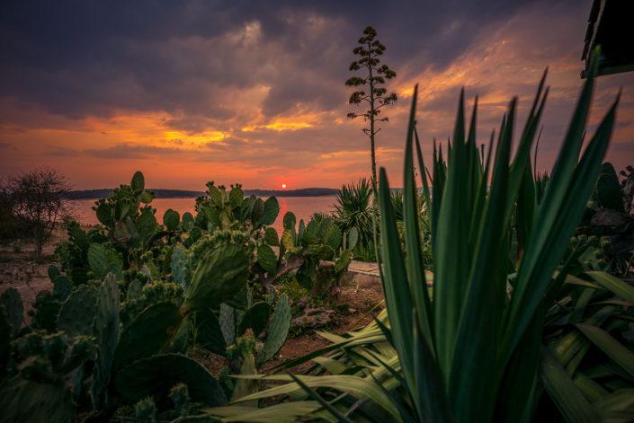 Ceja island cactus bar